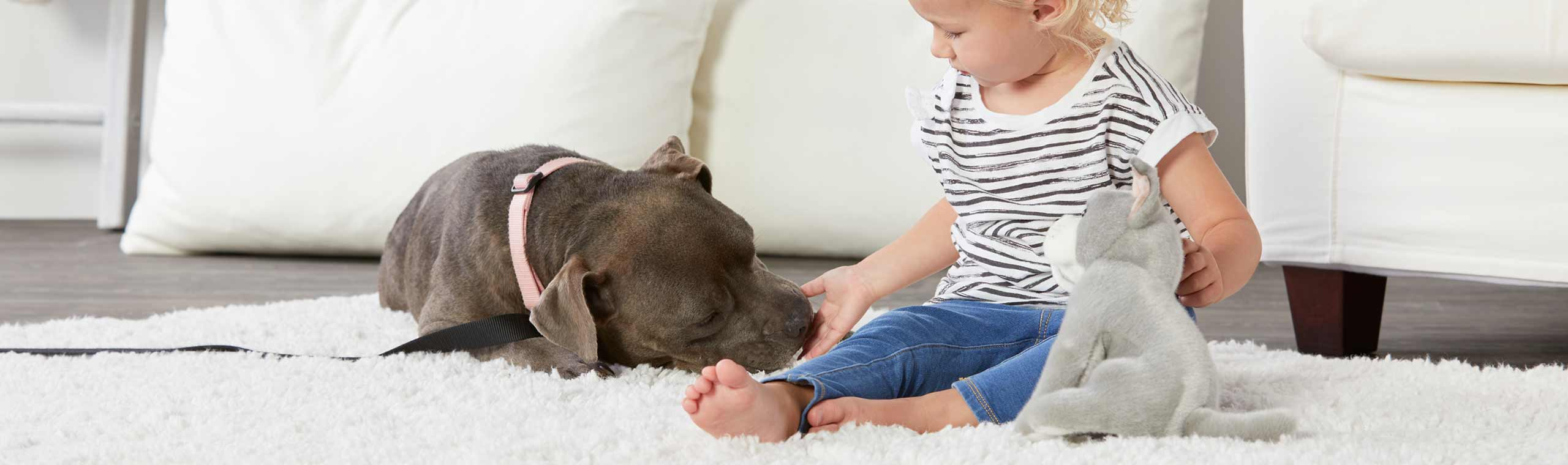 Toddler with dog stuffed animal and pet dog playing on the living room floor